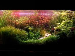 Aquascape Aquarium Plants Download Aquarium Netherlands Widaus Home Design