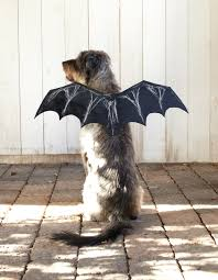 how to make a bat halloween costume for your dog