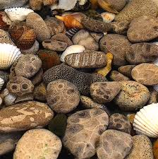 Polish Kitchen Petoskey Petoskey Stones With Shells Collection Summer 2013 Looking