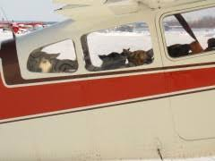 Window Seats For Dogs - dropped dogs take to the air u2013 iditarod