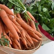 Root Vegetable Allergy - dietary u0026 food allergy guides yale hospitality