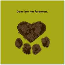 pet condolences 7 sympathy quotes to help cope with of a pet yourtango