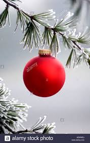 a single bulb hangs from a frosted pine tree stock photo