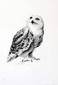 snowy owl mail owl original watercolour painting originals