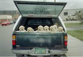 porta cani per auto in automobile con il ecco il vademecum regole sicurezza