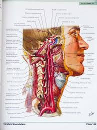 Anatomy And Physiology Saladin 6th Edition Netter Human Anatomy Online Free Page 3 Awesome Pictures And