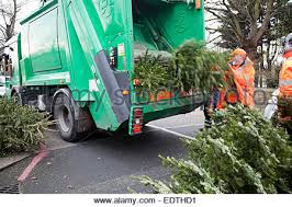 christmas tree recycling stock photo royalty free image 15491542