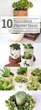 10 succulent planter ideas simple practical beautiful