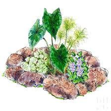 Rock Garden Plan Free Flower Garden Plan Free Blooming Rock Garden