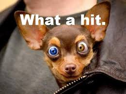 Stoned Dog Meme - stoner chihuahua what a bong hit pet funny weed memes