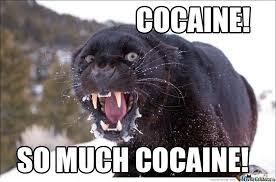 So Much Cocaine Meme - cocaine by nedesem meme center