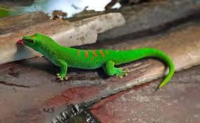 Seeking Lizard Cast Which Gecko Species Is Right For You