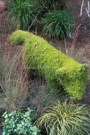 29 best topiary images on topiaries topiary