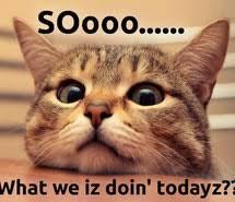 Cute Cat Memes - cute cat memes