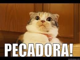 Gato Meme - gato pecador quickmeme