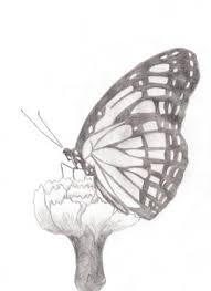 my butterfly drawing from this site