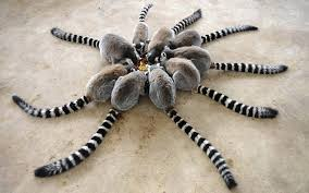 Lemur Meme - a circle of ring tailed lemur meme collection