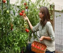 how to create a beautiful and useful indoor vegetable garden