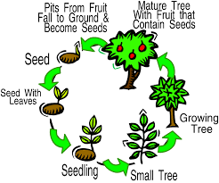 animal and plant life cycles lessons tes teach