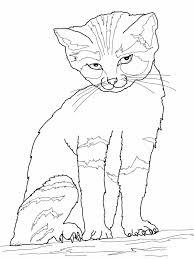 print cat coloring sheets new at set animal coloring incredible