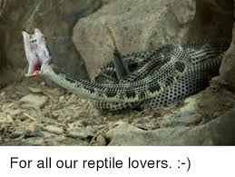Reptile Memes - for all our reptile lovers meme on me me