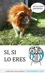 imagenes chistosas y tiernas tiernos memes para facebook en español memeando com