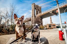 queen s dogs these neighborhoods in queens are the most dog friendly in the