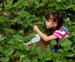 halloween city in watertown ny best strawberry picking ny spots for kids and families