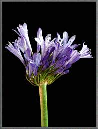 mic uk a flower garden of macroscopic delights