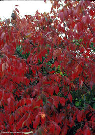 south texas native plants texas native plants database