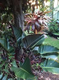 native hawaiian plant nursery sunrise nursery llc plants nursery kailua kona hi