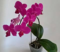 Orchids Facts by July 2015 Foreign Escapades