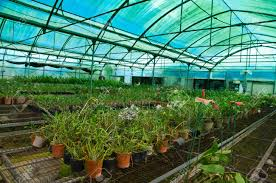 plant green house orchid flower nursery stock photo picture and