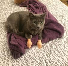 Random Cat Meme - random cat memes hope you enjoy album on imgur