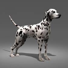 dalmatian dog model