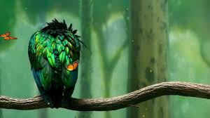 bird free hd top most downloaded wallpapers page 50
