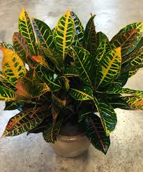 houseplants 5 easiest houseplants to keep alive freytag u0027s florist