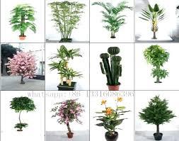 decorative indoor plants decorative indoor trees types of indoor plants different types of