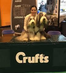 affenpinscher crufts 2014 warlingham dog training club ringcraft
