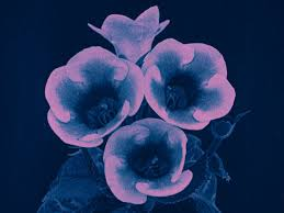 Blue And Purple Flowers See London In Bloom In 1924 Bfi