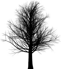 free illustration tree branches leafless bare free image on