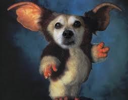 Gremlins Costume Halloween 20 Dog Costumes Images Animals Animal