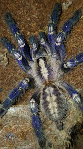 the world s best photos of metallica and tarantula flickr hive mind