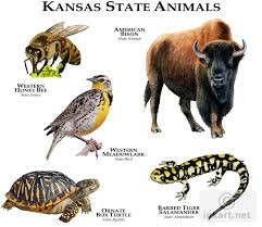 Kansas wild animals images Full color illustration of a state animals of kansas animals jpg