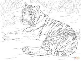 siberian tiger laying down coloring page free printable coloring