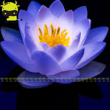 blue seed compare prices on blue water flower online shopping buy low price