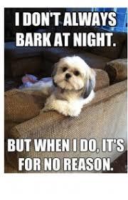 T Dog Memes - 45 funny dog memes dogtime