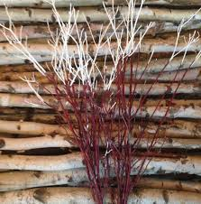 3 4ft painted top red dogwood branches home decor interior