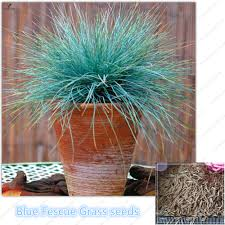 compare prices on grass seed drought tolerant shopping buy