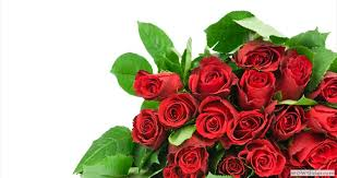Next Day Flower Delivery Same Day Flower Delivery Charlotte Nc 704 332 7245